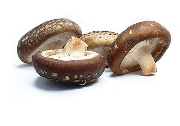 HP-imagem1-cogumelos