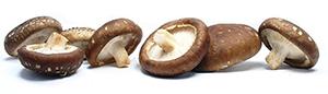 menu-servicos-cogumelos